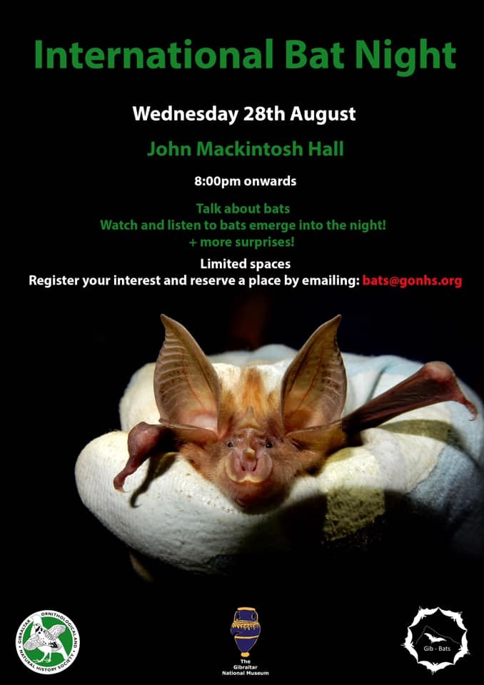 International Bat Night 2019 Image
